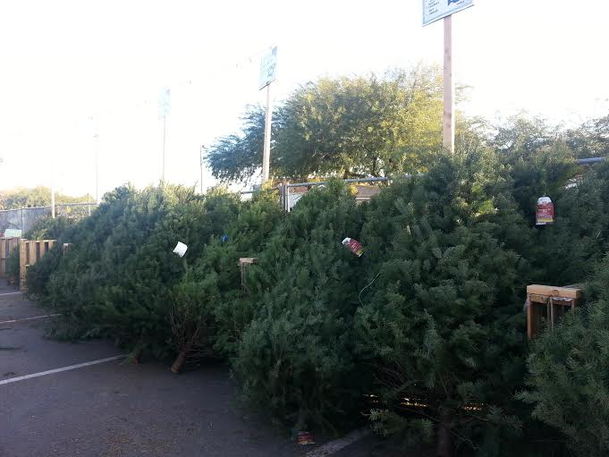 Trees for sale can be found at Fry's Marketplace, Home Depot, Lowes, and local farms. The price of your tree depends on the type and height.