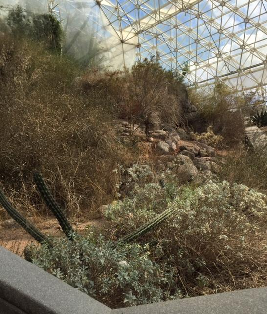The desert biome was just like walking outside. Filled with cacti and other desert plants, the resemblance to Arizona was uncanny.