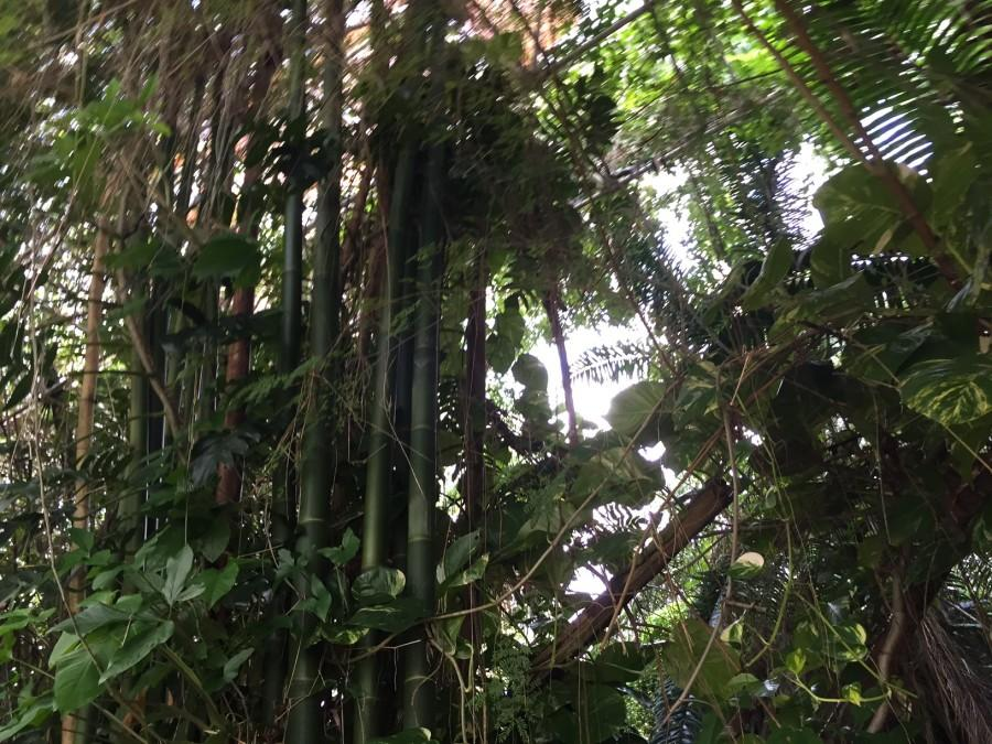 The rainforest was filled with beautiful bamboo and banana trees.