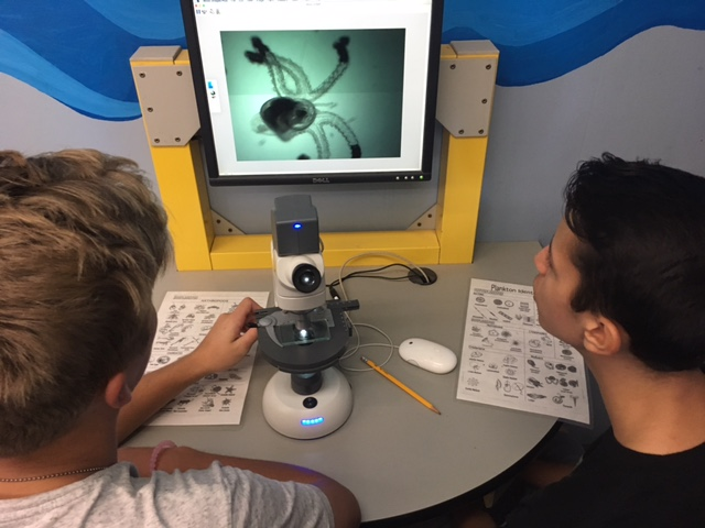 Freshman Juan Otalora-Bautista and Junior Dylan Lange find a developing octopus in a drop of water from the ocean through a microscope.