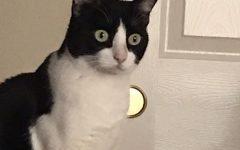 My cat, Sophie.