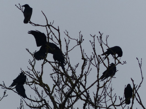 Crows have been a symbol of darkness and death for centuries.
