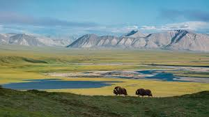 The ANWR protects many species but may soon be gone.