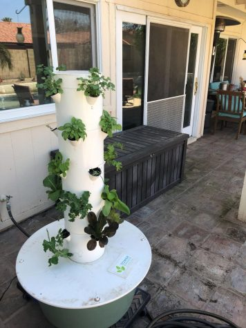 The Tower Garden.