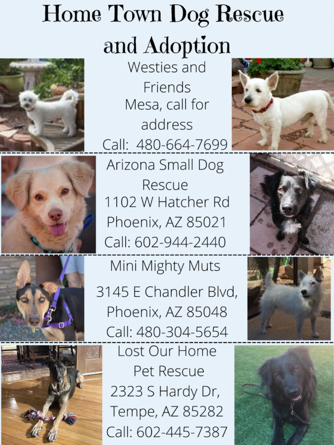 Dog Rescue and Adoption