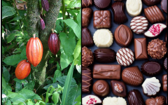 A drink, a currency, and a bar. How our use of chocolate has evolved over the centuries.