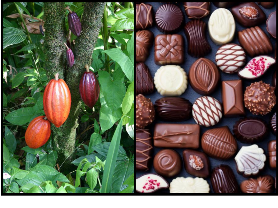 A+drink%2C+a+currency%2C+and+a+bar.+How+our+use+of+chocolate+has+evolved+over+the+centuries.